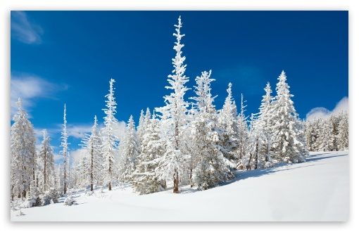 Beautiful Snowy Forest HD wallpaper for Wide 16:10 5:3 Widescreen WHXGA WQXGA WUXGA WXGA WGA ; HD 16:9 High Definition WQHD QWXGA 1080p 900p 720p QHD nHD ; Standard 4:3 5:4 3:2 Fullscreen UXGA XGA SVGA QSXGA SXGA DVGA HVGA HQVGA devices ( Apple PowerBook G4 iPhone 4 3G 3GS iPod Touch ) ; Tablet 1:1 ; iPad 1/2/Mini ; Mobile 4:3 5:3 3:2 16:9 5:4 - UXGA XGA SVGA WGA DVGA HVGA HQVGA devices ( Apple PowerBook G4 iPhone 4 3G 3GS iPod Touch ) WQHD QWXGA 1080p 900p 720p QHD nHD QSXGA SXGA ;
