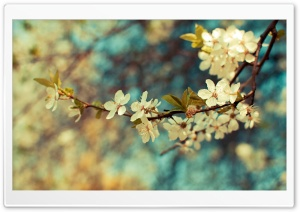 Beautiful Spring Day HD Wide Wallpaper for Widescreen