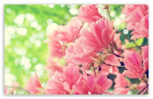 Beautiful Spring Flowers HD wallpaper for Wide 16:10 5:3 Widescreen WHXGA WQXGA WUXGA WXGA WGA ; HD 16:9 High Definition WQHD QWXGA 1080p 900p 720p QHD nHD ; Standard 4:3 5:4 3:2 Fullscreen UXGA XGA SVGA QSXGA SXGA DVGA HVGA HQVGA devices ( Apple PowerBook G4 iPhone 4 3G 3GS iPod Touch ) ; Tablet 1:1 ; iPad 1/2/Mini ; Mobile 4:3 5:3 3:2 16:9 5:4 - UXGA XGA SVGA WGA DVGA HVGA HQVGA devices ( Apple PowerBook G4 iPhone 4 3G 3GS iPod Touch ) WQHD QWXGA 1080p 900p 720p QHD nHD QSXGA SXGA ; Dual 5:4 QSXGA SXGA ;
