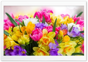 Beautiful Spring Flowers HD Wide Wallpaper for Widescreen
