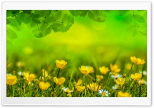 Beautiful Spring Meadow HD Wide Wallpaper for Widescreen