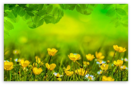 Beautiful Spring Meadow UltraHD Wallpaper for Wide 16:10 5:3 Widescreen WHXGA WQXGA WUXGA WXGA WGA ; 8K UHD TV 16:9 Ultra High Definition 2160p 1440p 1080p 900p 720p ; Standard 4:3 5:4 3:2 Fullscreen UXGA XGA SVGA QSXGA SXGA DVGA HVGA HQVGA ( Apple PowerBook G4 iPhone 4 3G 3GS iPod Touch ) ; Tablet 1:1 ; iPad 1/2/Mini ; Mobile 4:3 5:3 3:2 16:9 5:4 - UXGA XGA SVGA WGA DVGA HVGA HQVGA ( Apple PowerBook G4 iPhone 4 3G 3GS iPod Touch ) 2160p 1440p 1080p 900p 720p QSXGA SXGA ;