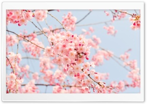Beautiful Spring Season HD Wide Wallpaper for Widescreen