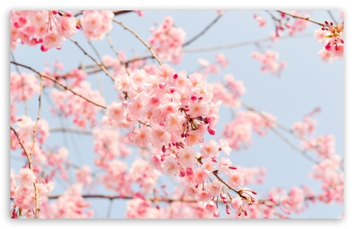 Beautiful Spring Season ❤ 4K UHD Wallpaper for Wide 16:10 5:3 Widescreen WHXGA WQXGA WUXGA WXGA WGA ; 4K UHD 16:9 Ultra High Definition 2160p 1440p 1080p 900p 720p ; Standard 4:3 5:4 3:2 Fullscreen UXGA XGA SVGA QSXGA SXGA DVGA HVGA HQVGA ( Apple PowerBook G4 iPhone 4 3G 3GS iPod Touch ) ; Smartphone 5:3 WGA ; Tablet 1:1 ; iPad 1/2/Mini ; Mobile 4:3 5:3 3:2 16:9 5:4 - UXGA XGA SVGA WGA DVGA HVGA HQVGA ( Apple PowerBook G4 iPhone 4 3G 3GS iPod Touch ) 2160p 1440p 1080p 900p 720p QSXGA SXGA ;
