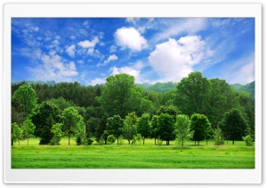 Beautiful Summer Landscape HD Wide Wallpaper for Widescreen