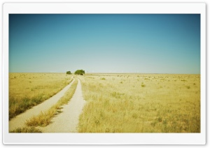 Beautiful Summer Landscape With A Field Path HD Wide Wallpaper for Widescreen