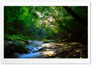 Beautiful Sunlight at Forest HD Wide Wallpaper for Widescreen