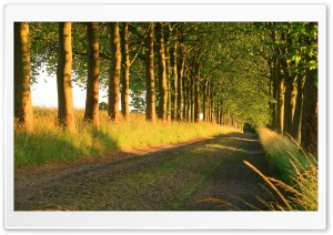 Beautiful Sunny Road HD Wide Wallpaper for Widescreen