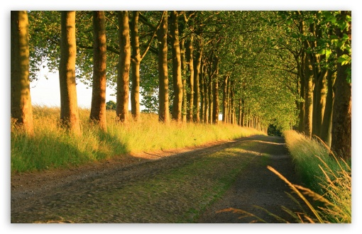 Beautiful Sunny Road HD wallpaper for Wide 16:10 5:3 Widescreen WHXGA WQXGA WUXGA WXGA WGA ; HD 16:9 High Definition WQHD QWXGA 1080p 900p 720p QHD nHD ; Standard 4:3 5:4 3:2 Fullscreen UXGA XGA SVGA QSXGA SXGA DVGA HVGA HQVGA devices ( Apple PowerBook G4 iPhone 4 3G 3GS iPod Touch ) ; Tablet 1:1 ; iPad 1/2/Mini ; Mobile 4:3 5:3 3:2 16:9 5:4 - UXGA XGA SVGA WGA DVGA HVGA HQVGA devices ( Apple PowerBook G4 iPhone 4 3G 3GS iPod Touch ) WQHD QWXGA 1080p 900p 720p QHD nHD QSXGA SXGA ; Dual 5:4 QSXGA SXGA ;