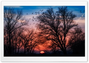 Beautiful Sunrise HD Wide Wallpaper for Widescreen
