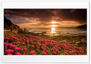 Beautiful sunset Ultra HD Wallpaper for 4K UHD Widescreen desktop, tablet & smartphone