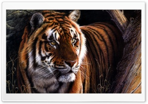 Beautiful Tiger Ultra HD Wallpaper for 4K UHD Widescreen desktop, tablet & smartphone