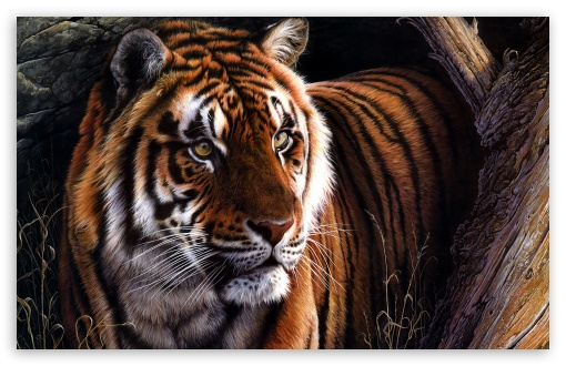 Beautiful Tiger HD wallpaper for Wide 16:10 5:3 Widescreen WHXGA WQXGA WUXGA WXGA WGA ; Standard 4:3 5:4 3:2 Fullscreen UXGA XGA SVGA QSXGA SXGA DVGA HVGA HQVGA devices ( Apple PowerBook G4 iPhone 4 3G 3GS iPod Touch ) ; iPad 1/2/Mini ; Mobile 4:3 5:3 3:2 5:4 - UXGA XGA SVGA WGA DVGA HVGA HQVGA devices ( Apple PowerBook G4 iPhone 4 3G 3GS iPod Touch ) QSXGA SXGA ;