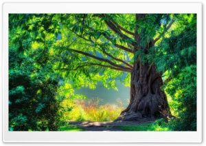 Beautiful Tree Ultra HD Wallpaper for 4K UHD Widescreen desktop, tablet & smartphone