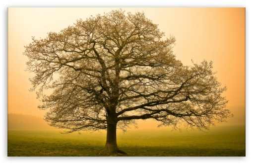 Beautiful Tree ❤ 4K UHD Wallpaper for Wide 16:10 Widescreen WHXGA WQXGA WUXGA WXGA ; Standard 4:3 5:4 3:2 Fullscreen UXGA XGA SVGA QSXGA SXGA DVGA HVGA HQVGA ( Apple PowerBook G4 iPhone 4 3G 3GS iPod Touch ) ; Tablet 1:1 ; iPad 1/2/Mini ; Mobile 4:3 3:2 5:4 - UXGA XGA SVGA DVGA HVGA HQVGA ( Apple PowerBook G4 iPhone 4 3G 3GS iPod Touch ) QSXGA SXGA ;
