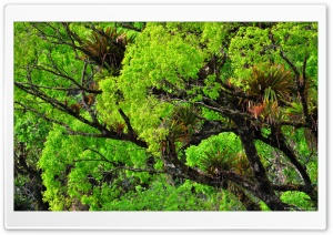 Beautiful Tree HD Wide Wallpaper for Widescreen