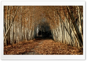 Beautiful Tree Alley, Autumn HD Wide Wallpaper for Widescreen