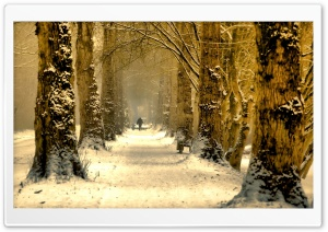 Beautiful Tree Alley, Winter HD Wide Wallpaper for Widescreen