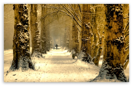 Beautiful Tree Alley, Winter UltraHD Wallpaper for Wide 16:10 5:3 Widescreen WHXGA WQXGA WUXGA WXGA WGA ; 8K UHD TV 16:9 Ultra High Definition 2160p 1440p 1080p 900p 720p ; Standard 4:3 5:4 3:2 Fullscreen UXGA XGA SVGA QSXGA SXGA DVGA HVGA HQVGA ( Apple PowerBook G4 iPhone 4 3G 3GS iPod Touch ) ; Tablet 1:1 ; iPad 1/2/Mini ; Mobile 4:3 5:3 3:2 16:9 5:4 - UXGA XGA SVGA WGA DVGA HVGA HQVGA ( Apple PowerBook G4 iPhone 4 3G 3GS iPod Touch ) 2160p 1440p 1080p 900p 720p QSXGA SXGA ; Dual 16:10 5:3 16:9 4:3 5:4 WHXGA WQXGA WUXGA WXGA WGA 2160p 1440p 1080p 900p 720p UXGA XGA SVGA QSXGA SXGA ;