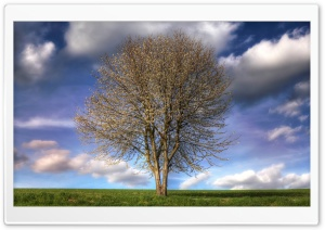 Beautiful Tree, Spring HD Wide Wallpaper for 4K UHD Widescreen desktop & smartphone