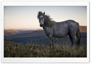 Beautiful Wild Horse HD Wide Wallpaper for Widescreen