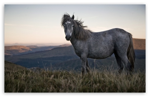 Beautiful Wild Horse HD wallpaper for Wide 16:10 5:3 Widescreen WHXGA WQXGA WUXGA WXGA WGA ; HD 16:9 High Definition WQHD QWXGA 1080p 900p 720p QHD nHD ; Standard 4:3 5:4 3:2 Fullscreen UXGA XGA SVGA QSXGA SXGA DVGA HVGA HQVGA devices ( Apple PowerBook G4 iPhone 4 3G 3GS iPod Touch ) ; Tablet 1:1 ; iPad 1/2/Mini ; Mobile 4:3 5:3 3:2 16:9 5:4 - UXGA XGA SVGA WGA DVGA HVGA HQVGA devices ( Apple PowerBook G4 iPhone 4 3G 3GS iPod Touch ) WQHD QWXGA 1080p 900p 720p QHD nHD QSXGA SXGA ;