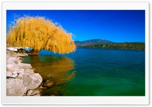 Beautiful Willow HD Wide Wallpaper for 4K UHD Widescreen desktop & smartphone
