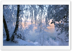 Beautiful Winter Frost HD Wide Wallpaper for Widescreen