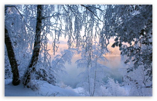 Beautiful Winter Frost HD wallpaper for Wide 16:10 5:3 Widescreen WHXGA WQXGA WUXGA WXGA WGA ; HD 16:9 High Definition WQHD QWXGA 1080p 900p 720p QHD nHD ; Standard 4:3 5:4 3:2 Fullscreen UXGA XGA SVGA QSXGA SXGA DVGA HVGA HQVGA devices ( Apple PowerBook G4 iPhone 4 3G 3GS iPod Touch ) ; Tablet 1:1 ; iPad 1/2/Mini ; Mobile 4:3 5:3 3:2 16:9 5:4 - UXGA XGA SVGA WGA DVGA HVGA HQVGA devices ( Apple PowerBook G4 iPhone 4 3G 3GS iPod Touch ) WQHD QWXGA 1080p 900p 720p QHD nHD QSXGA SXGA ; Dual 4:3 5:4 UXGA XGA SVGA QSXGA SXGA ;