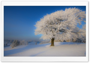 Beautiful Winter Landscape HD Wide Wallpaper for Widescreen