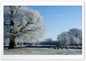 Beautiful Winter Landscape Along The Kromme Rijn River HD Wide Wallpaper for Widescreen
