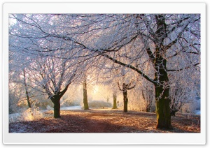 Beautiful Winter Light HD Wide Wallpaper for Widescreen
