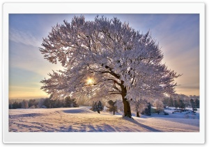 Beautiful Winter Morning HD Wide Wallpaper for 4K UHD Widescreen desktop & smartphone