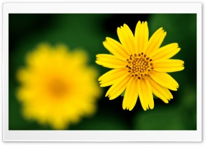 Beautiful Yellow Flower HD Wide Wallpaper for Widescreen