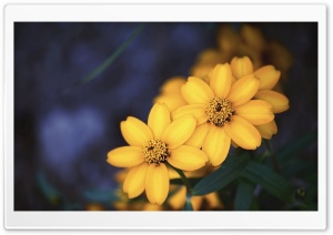 Beautiful Yellow Flowers HD Wide Wallpaper for Widescreen