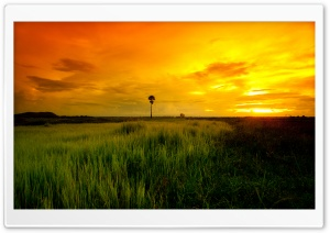Beautiful Yellow Sunset HD Wide Wallpaper for Widescreen