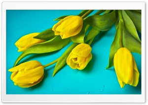 Beautiful Yellow Tulips HD Wide Wallpaper for Widescreen