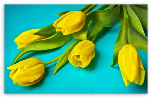 Beautiful Yellow Tulips ❤ 4K UHD Wallpaper for Wide 16:10 5:3 Widescreen WHXGA WQXGA WUXGA WXGA WGA ; 4K UHD 16:9 Ultra High Definition 2160p 1440p 1080p 900p 720p ; UHD 16:9 2160p 1440p 1080p 900p 720p ; Standard 4:3 5:4 3:2 Fullscreen UXGA XGA SVGA QSXGA SXGA DVGA HVGA HQVGA ( Apple PowerBook G4 iPhone 4 3G 3GS iPod Touch ) ; Smartphone 5:3 WGA ; Tablet 1:1 ; iPad 1/2/Mini ; Mobile 4:3 5:3 3:2 16:9 5:4 - UXGA XGA SVGA WGA DVGA HVGA HQVGA ( Apple PowerBook G4 iPhone 4 3G 3GS iPod Touch ) 2160p 1440p 1080p 900p 720p QSXGA SXGA ; Dual 16:10 4:3 5:4 WHXGA WQXGA WUXGA WXGA UXGA XGA SVGA QSXGA SXGA ;
