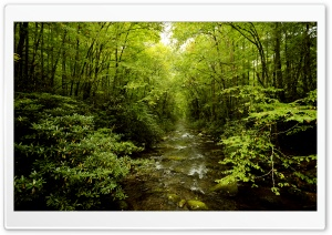 Beautiful Young Forest HD Wide Wallpaper for Widescreen