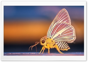 Beautiufl Moth HD Wide Wallpaper for Widescreen