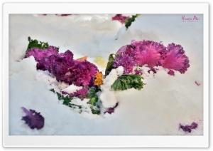 Beauty Ice Ultra HD Wallpaper for 4K UHD Widescreen desktop, tablet & smartphone