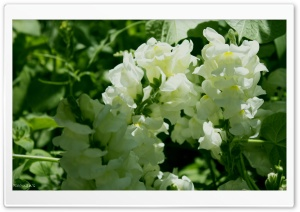 Beauty Of Whites HD Wide Wallpaper for Widescreen