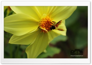 Beauty of Yellow HD Wide Wallpaper for Widescreen