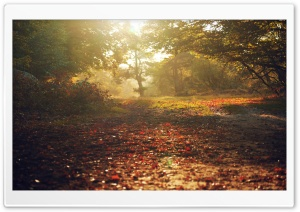 Bed Of Leaves, Autumn HD Wide Wallpaper for Widescreen