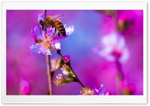 Bee, Blossom Tree, Spring HD Wide Wallpaper for Widescreen