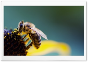 Bee Pollen HD Wide Wallpaper for Widescreen