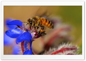 Bee Pollinating Flowers HD Wide Wallpaper for Widescreen