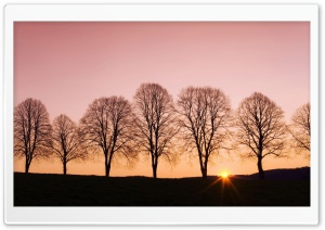 Beech Trees At Sunrise HD Wide Wallpaper for Widescreen