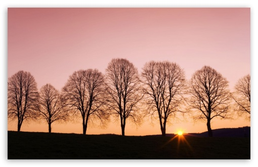 Beech Trees At Sunrise ❤ 4K UHD Wallpaper for Wide 16:10 5:3 Widescreen WHXGA WQXGA WUXGA WXGA WGA ; 4K UHD 16:9 Ultra High Definition 2160p 1440p 1080p 900p 720p ; Standard 4:3 5:4 3:2 Fullscreen UXGA XGA SVGA QSXGA SXGA DVGA HVGA HQVGA ( Apple PowerBook G4 iPhone 4 3G 3GS iPod Touch ) ; Tablet 1:1 ; iPad 1/2/Mini ; Mobile 4:3 5:3 3:2 16:9 5:4 - UXGA XGA SVGA WGA DVGA HVGA HQVGA ( Apple PowerBook G4 iPhone 4 3G 3GS iPod Touch ) 2160p 1440p 1080p 900p 720p QSXGA SXGA ;