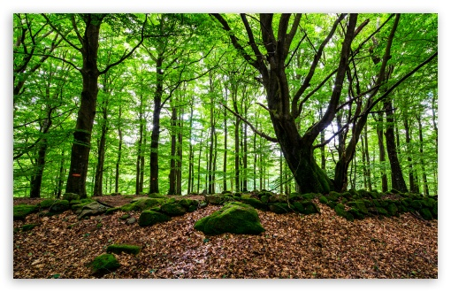 Beech Woods UltraHD Wallpaper for Wide 16:10 5:3 Widescreen WHXGA WQXGA WUXGA WXGA WGA ; UltraWide 21:9 24:10 ; 8K UHD TV 16:9 Ultra High Definition 2160p 1440p 1080p 900p 720p ; UHD 16:9 2160p 1440p 1080p 900p 720p ; Tablet 1:1 ; Mobile 5:3 16:9 - WGA 2160p 1440p 1080p 900p 720p ; Dual 16:10 5:3 16:9 4:3 5:4 3:2 WHXGA WQXGA WUXGA WXGA WGA 2160p 1440p 1080p 900p 720p UXGA XGA SVGA QSXGA SXGA DVGA HVGA HQVGA ( Apple PowerBook G4 iPhone 4 3G 3GS iPod Touch ) ;